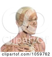 Royalty Free CGI Clip Art Illustration Of A 3d Male Head With Transparent Muscles Showing Bone And Brain