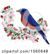 Bluebird Perched In Apple Blossoms 2
