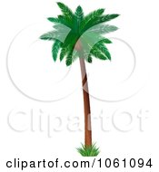 3d Coconut Palm Tree With Lush Green Foliage Royalty Free Vector Clip Art Illustration by KJ Pargeter