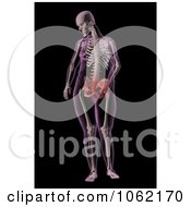 Clipart 3d Overweight Female Skeleton With A Stomach Ache Royalty Free CGI Illustration