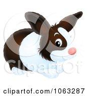 Clipart Dutch Rabbit Royalty Free Illustration