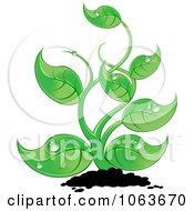 Lush Seedling Plant
