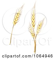 Clipart Grains Digital Collage 2 Royalty Free Vector Illustration