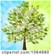 Clipart 3d Tree Over Blue And Green Royalty Free Vector Illustration