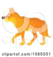 Orange Wolf Walking