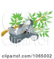 Clipart Koala Hanging In A Eucalyptus Royalty Free Illustration by Alex Bannykh #COLLC1065002-0056