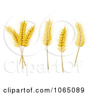 Clipart Grains Digital Collage 5 Royalty Free Vector Illustration