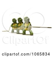 3d Tortoises In A Game Of Tug Of War