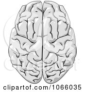 Clipart Human Brain 3 Royalty Free Vector Illustration