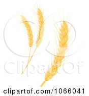 Clipart Grains Digital Collage 4 Royalty Free Vector Illustration