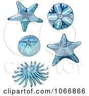Clipart Starfish And Sea Urchins Royalty Free Vector Illustration