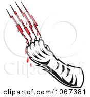 Tiger Drawing Blood From Scratches