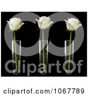 Clipart Three Ivory Roses In Three Vases Royalty Free Vector Illustration
