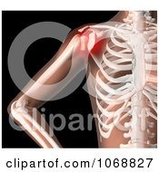 Clipart 3d Female Skeleton With Highlighted Shoulder Pain Royalty Free CGI Illustration