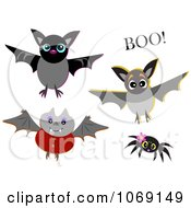 Spider And Vampire Bats