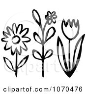Black And White Spring Flowers