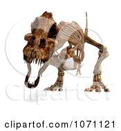 Clipart 3d Tyrannosaurus Rex T Rex Dinosaur Bones Skeleton 7 Royalty Free CGI Illustration by Ralf61