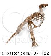 Clipart 3d Tyrannosaurus Rex T Rex Dinosaur Bones Skeleton 8 Royalty Free CGI Illustration by Ralf61