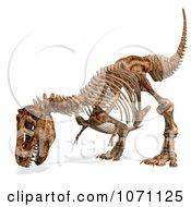 Clipart 3d Tyrannosaurus Rex T Rex Dinosaur Bones Skeleton 6 Royalty Free CGI Illustration by Ralf61