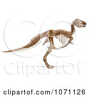 3d Tyrannosaurus Rex T-Rex Dinosaur Bones Skeleton 2