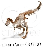 Clipart 3d Tyrannosaurus Rex T Rex Dinosaur Bones Skeleton 3 Royalty Free CGI Illustration by Ralf61