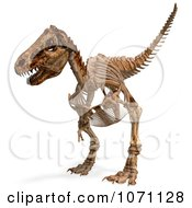 Clipart 3d Tyrannosaurus Rex T Rex Dinosaur Bones Skeleton 4 Royalty Free CGI Illustration