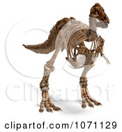 Clipart 3d Tyrannosaurus Rex T Rex Dinosaur Bones Skeleton 1 Royalty Free CGI Illustration by Ralf61