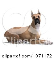 Clipart 3d Fawn Great Dane Dog Resting Royalty Free CGI Illustration by Ralf61