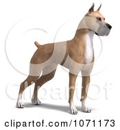 Clipart 3d Fawn Great Dane Dog Standing Royalty Free CGI Illustration