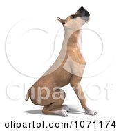 Clipart 3d Fawn Great Dane Dog Preparing To Jump Royalty Free CGI Illustration by Ralf61