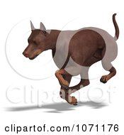Clipart 3d Red Doberman Pinscher Dog Running 1 Royalty Free CGI Illustration by Ralf61