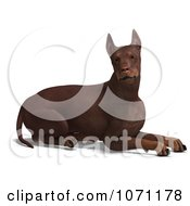 Clipart 3d Red Doberman Pinscher Dog Resting Royalty Free CGI Illustration