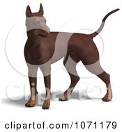 Clipart 3d Red Doberman Pinscher Dog Standing Alert Royalty Free CGI Illustration