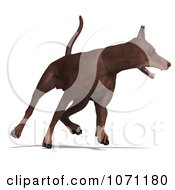 Clipart 3d Red Doberman Pinscher Dog Running 2 Royalty Free CGI Illustration