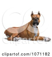 3d Fawn And White Boxer Dog Resting