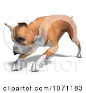 Clipart 3d Fawn And White Boxer Dog Bending Down Royalty Free CGI Illustration