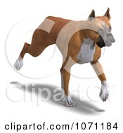 Clipart 3d Fawn And White Boxer Dog Trotting Royalty Free CGI Illustration