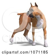 Clipart 3d Fawn And White Boxer Dog Looking To The Side Royalty Free CGI Illustration