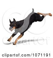 Clipart 3d Black Doberman Pinscher Dog Running 1 Royalty Free CGI Illustration