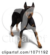 Clipart 3d Black Doberman Pinscher Dog In An Aggressive Stance Royalty Free CGI Illustration