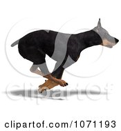 Clipart 3d Black Doberman Pinscher Dog Running 2 Royalty Free CGI Illustration