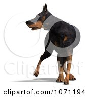 Clipart 3d Black Doberman Pinscher Dog Looking To The Side Royalty Free CGI Illustration