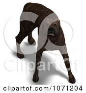 Clipart 3d Brindle Mastiff Dog In A Protective Stance Royalty Free CGI Illustration by Ralf61