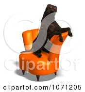 Clipart 3d Brindle Mastiff Dog Sitting Up In A Chair Royalty Free CGI Illustration by Ralf61