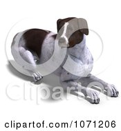 Clipart 3d German Shorthaired Pointer Dog Resting Royalty Free CGI Illustration by Ralf61