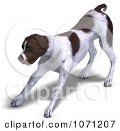 Clipart 3d German Shorthaired Pointer Dog Stretching Royalty Free CGI Illustration by Ralf61