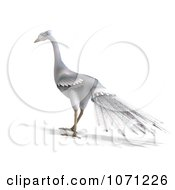 Clipart 3d White Peacock 6 Royalty Free CGI Illustration by Ralf61