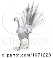 Clipart 3d White Peacock 2 Royalty Free CGI Illustration by Ralf61
