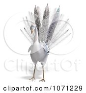 Clipart 3d White Peacock 1 Royalty Free CGI Illustration by Ralf61