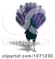 Clipart 3d Purple Peacock 1 Royalty Free CGI Illustration by Ralf61